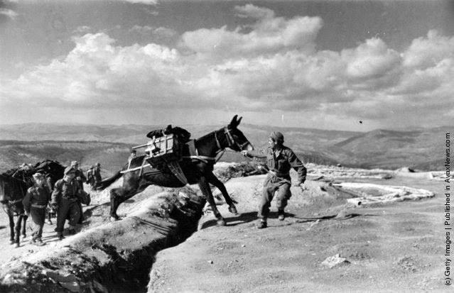 μουλάρι που μετέφερε πυρομαχικά κοντά  στο χωρίο Παπάδες στην Εύβοια κατά τη διάρκεια του Ελληνικού Εμφυλίου Πολέμου. (Φωτογραφία από Bert Hardy / Getty Images). 1948