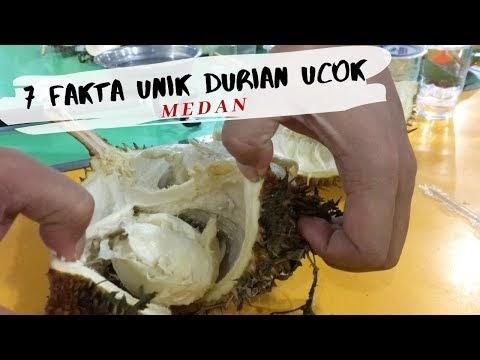 7 Fakta Unik Durian Ucok Medan Yang Harus Kamu Tahu