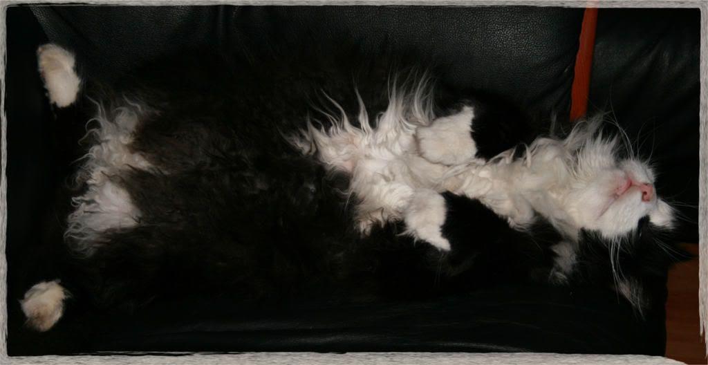 Pusen vår Mons i sofaen, he-he....