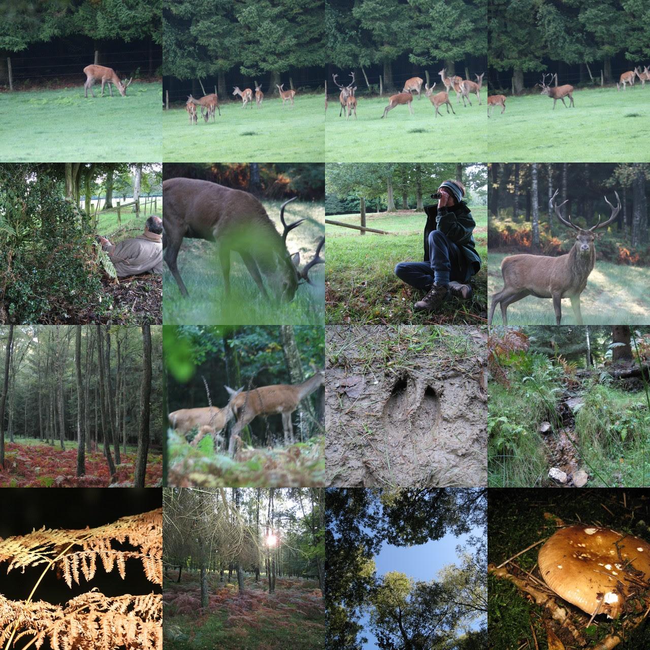 Nature-forêt-cerf-biche-ardenne-environnement