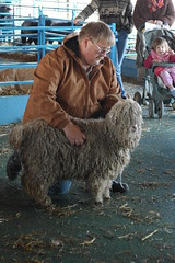 First Prize, Angora Goat