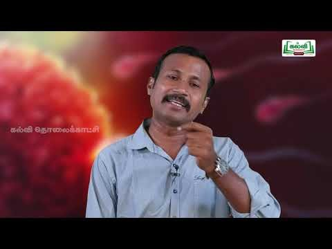 NEET Bio Zoology  உயிரியல்  மனித இனப்பெருக்கம் Kalvi TV