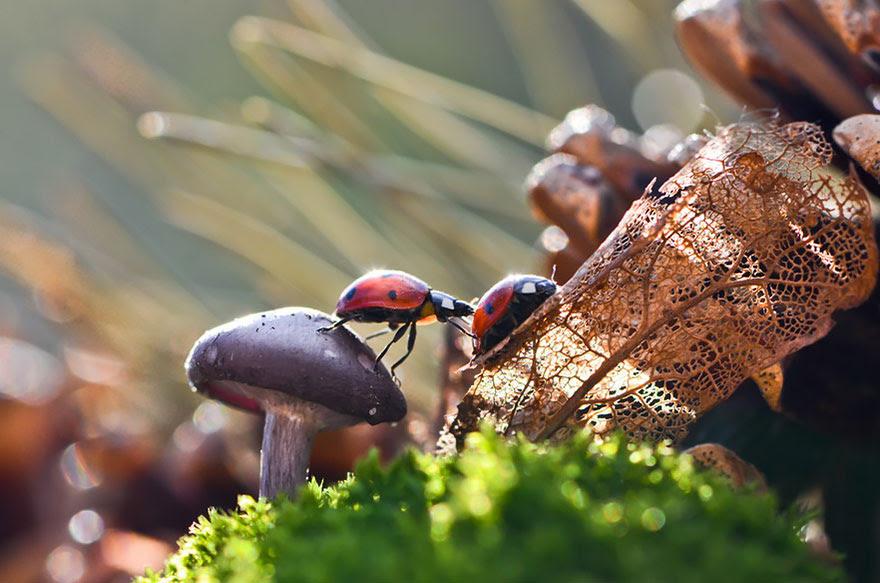 mushroom-photography-vyacheslav-mishchenko-34