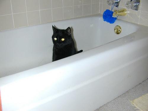 Takin' a Bath, Mr. Grr?