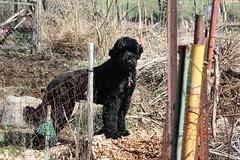 plot dog 2