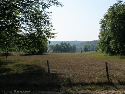 (14) No hay in this hayfield - FarmgirlFare.com