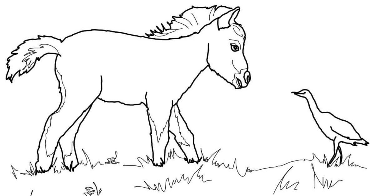 filly pferd ausmalbild - vorlagen zum ausmalen gratis