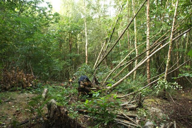 DSC_4539 windblown trees