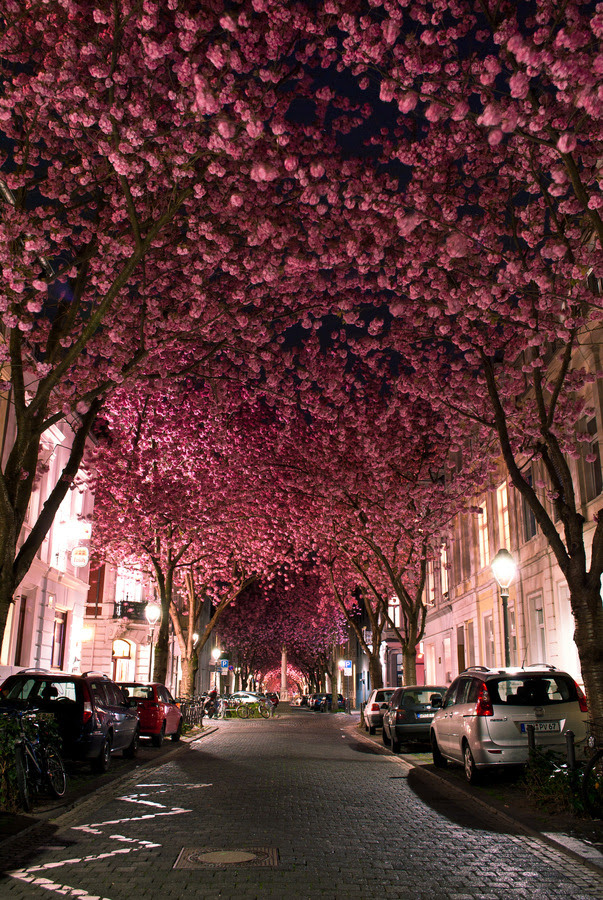 "lovedesignlife:  ""Cherry Blossom Avenue"" by Marcel Bednarz."