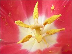 Invasion of the Pollen Snatchers