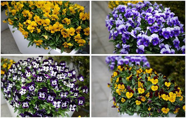 flowers in hongdae