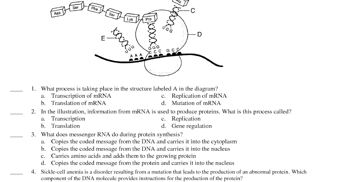 32 Dna And Replication Worksheet Answers Label The Diagram ...