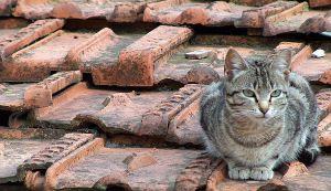 Resultado de imagem para Gatos nos telhados
