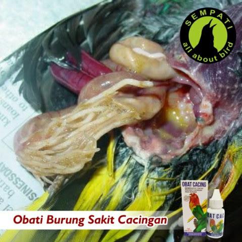 89 Gambar Obat Cacing Untuk Burung Terlihat Keren
