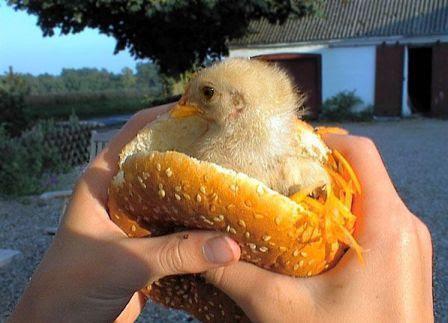 chicksamwich
