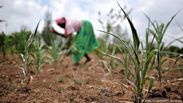 Drought in Kenya ©TONY KARUMBA/AFP/Getty Images