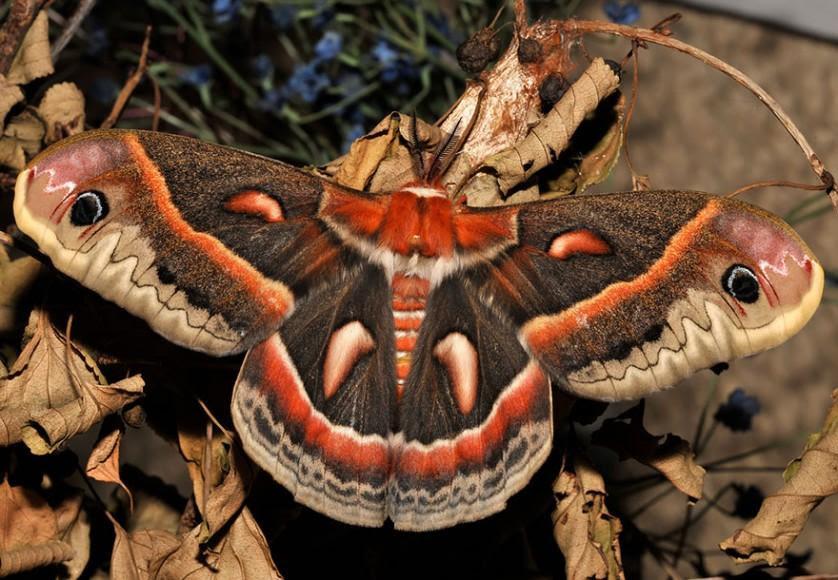 transformacao borboletas 2-