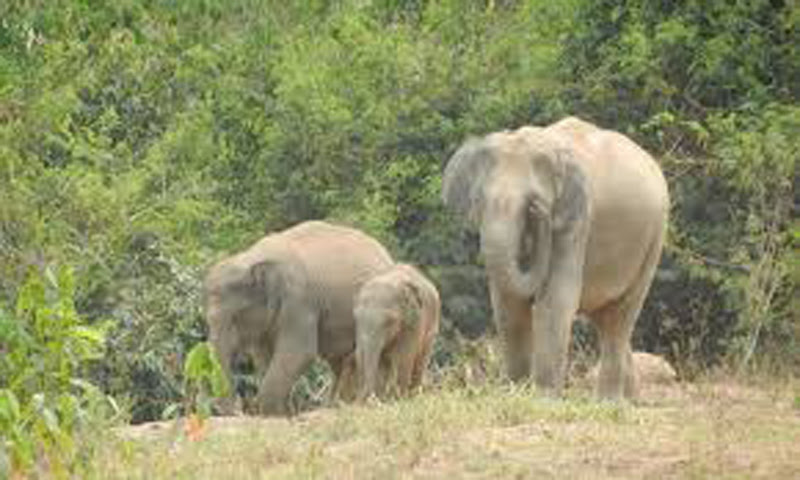 Writ petition seeking national policy for elephant protection