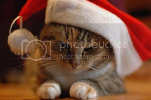 ChristmasCat2007.jpg Christmas Cat 2007 image by shy_1965