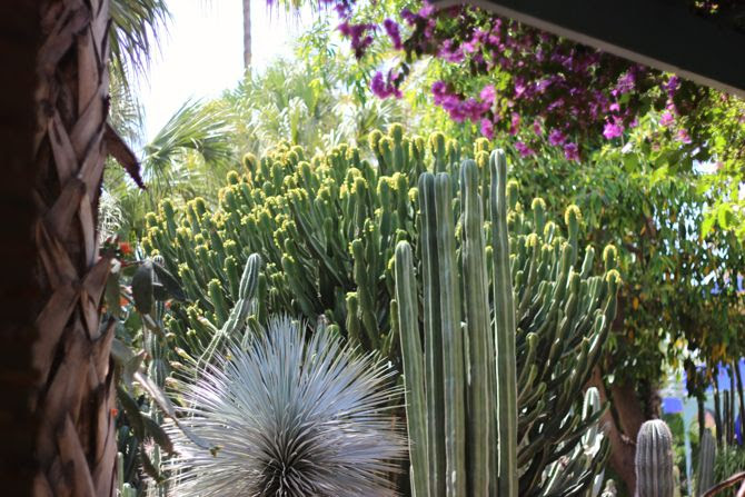 photo 29-jardin majorelle_marrakech-YSL_zpsubcd2w4q.jpg