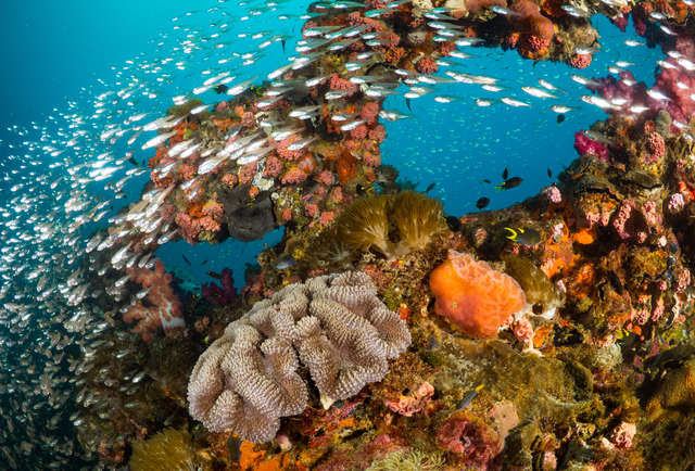 The Best Places Around the World to Scuba Dive
