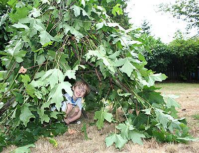 TreeClippingFort3