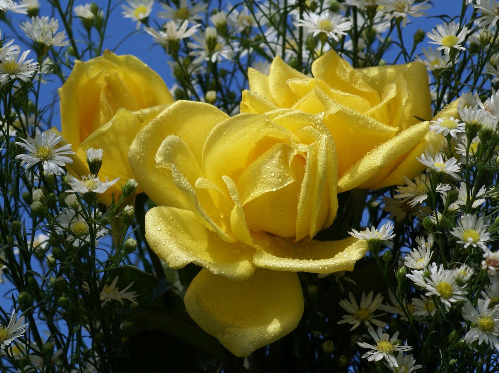 Fondo Flores Amarillas Tumblr