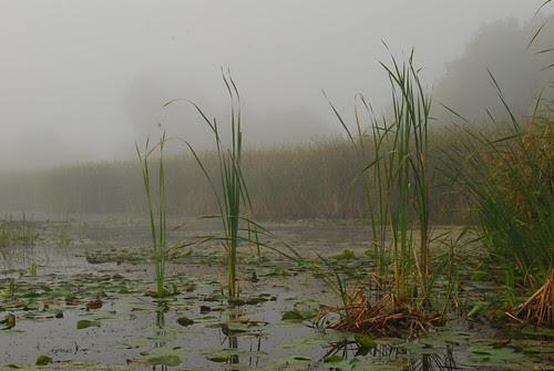 Marsh in early morning