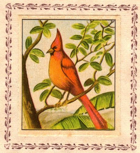 cardinal huppe