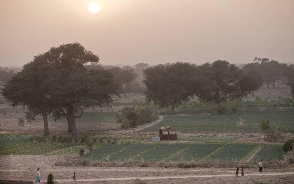 Cultivos y árboles en Tibiri (Níger).