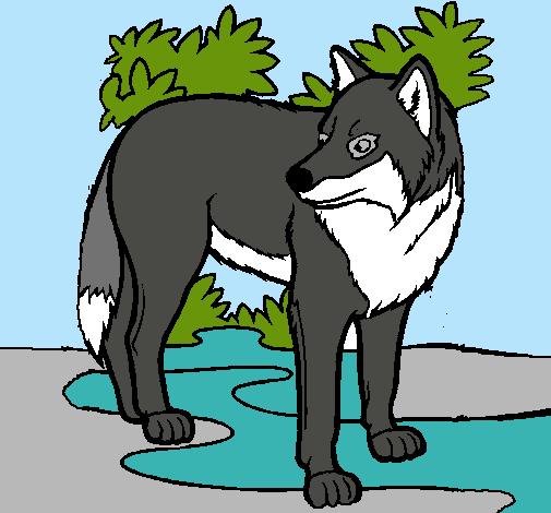 Dibujo De Lobo Pintado Por Nadia15 En Dibujosnet El Día 17 11 10 A