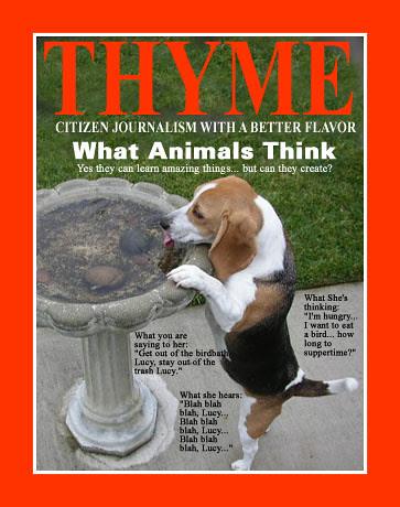 thyme0232