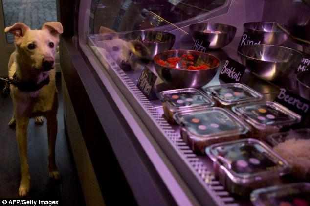 Mouthwatering: A dog named Pivo surveys the morels on offer at the Pets Deli food shop in Berlin's Gruenewald district