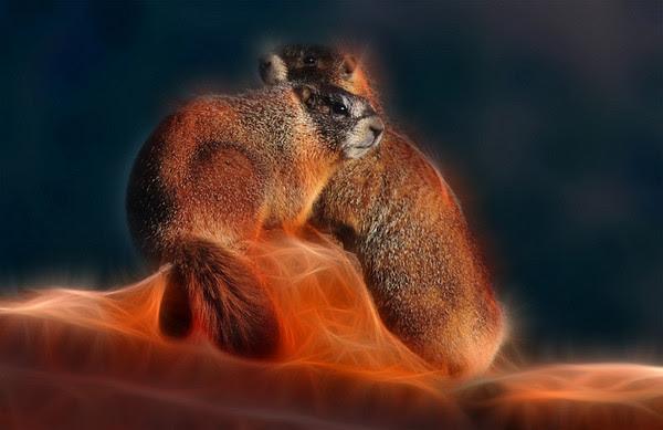 Fractalius Marmots