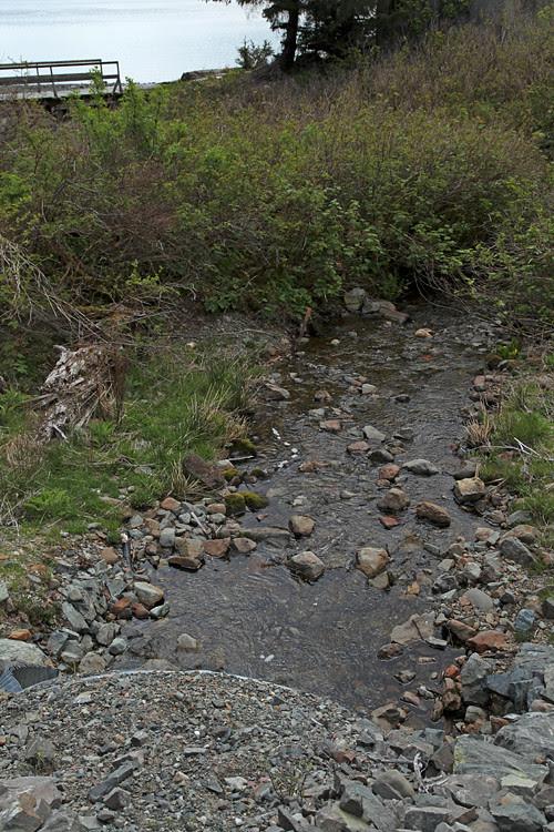 creek in the middle of Kasaan, Alaska