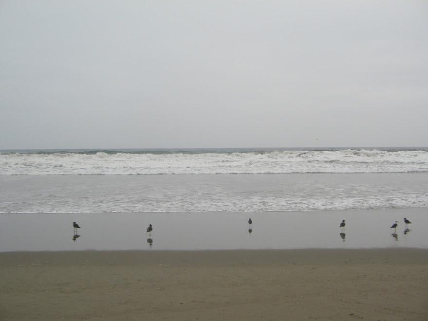 Resultado de imagen para playa chilca