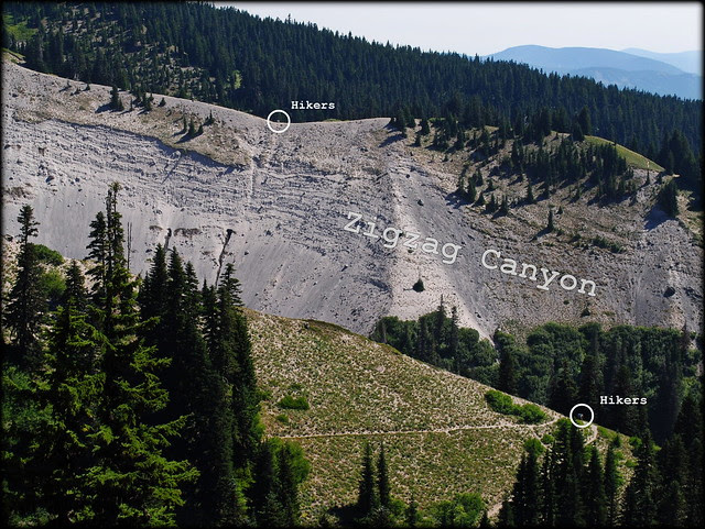 the magnitude of Zigzag Canyon - Paradise Park Loop trail - Mt. Hood