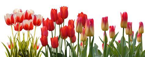 fungsi bunga  kehidupan sehari hari bunga papan lampung