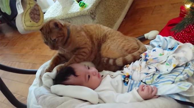Graban a su gato aproximándose demasiado al rostro del bebé y el video se vuelve viral