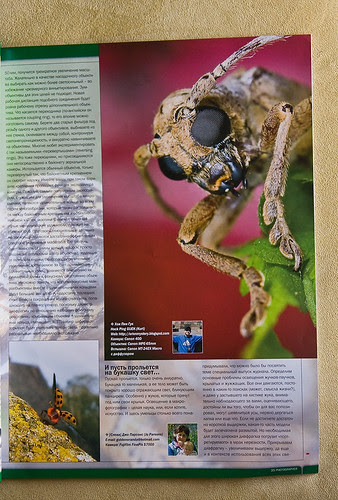 longhorn beetle on the front cover of Ukrainian Photographer MagazineIMG_5504 copy