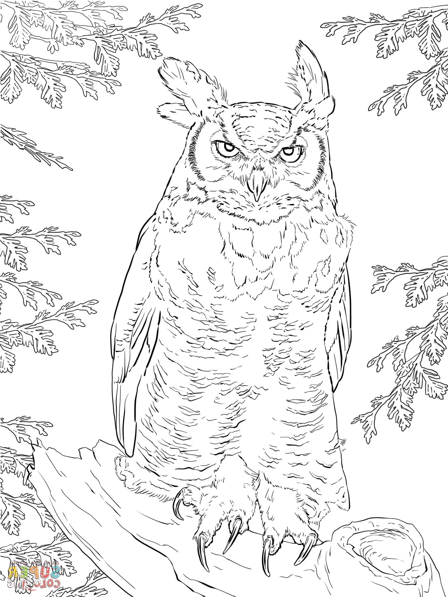 Realistic Owl Coloring Pages at GetColorings.com | Free ...