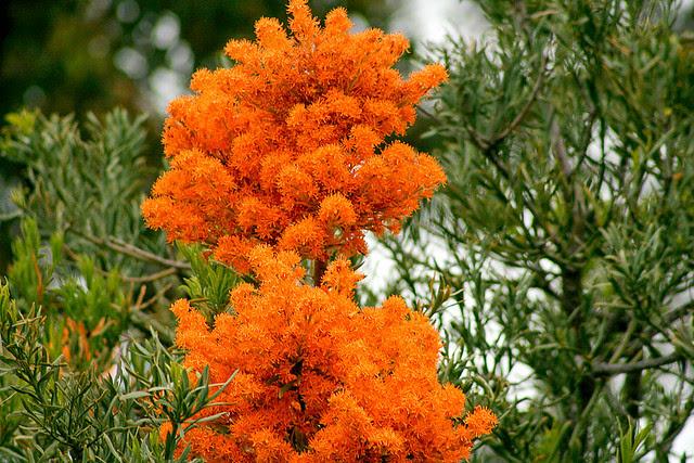 Ταχύτητα χρονολογίων πορτοκαλί NSW