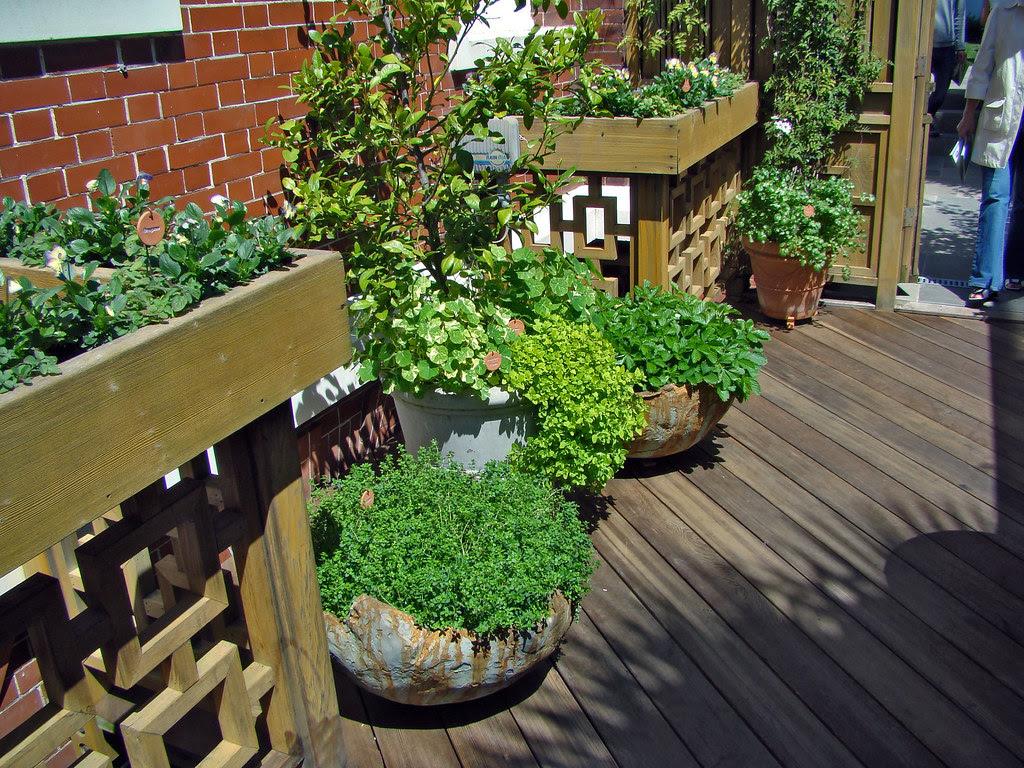 DSC05717 SF Designer Showcase kitchen garden