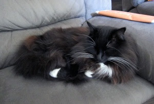 cat-has-feet1