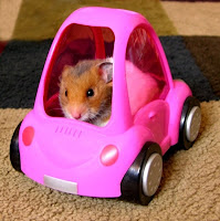 Top Gear's Richard Hammond picks his arse at the wheel