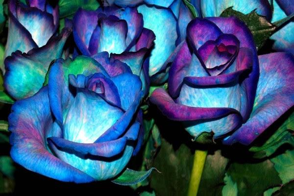 Hermosas Rosas Con Pétalos Azules Y Púrpuras 61968