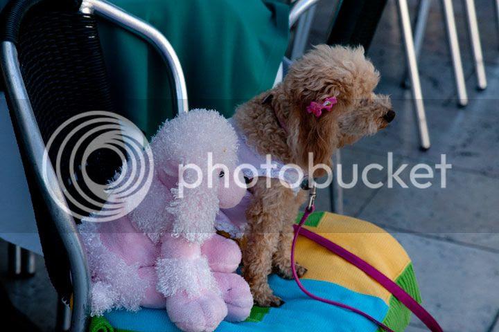 photo Pets_zps87258c92.jpg