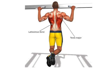 pull  muscles worked  diagram