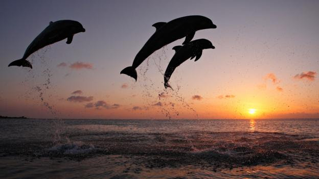 Dolphins! So awesome! (Credit: Brandon Cole/naturepl.com)