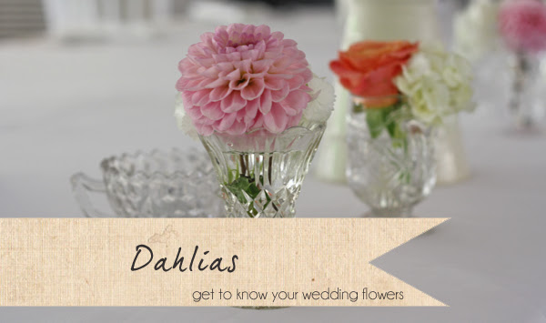 Dahlias Wedding Flowers Get To Know Your Wedding Flowers